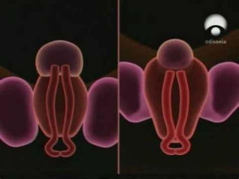 las imagenes virtuales se forman formacion de los organos genitales youtube