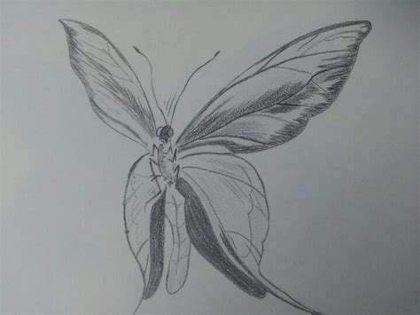 imagenes de mariposas a lapiz dibujos de mariposas con lapiz imagui