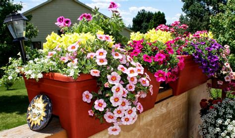 potted flowers for outdoors iimajackrussell garages