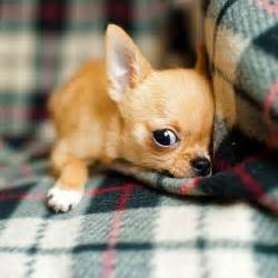 Free Puppies Image Gallery Real Puppies