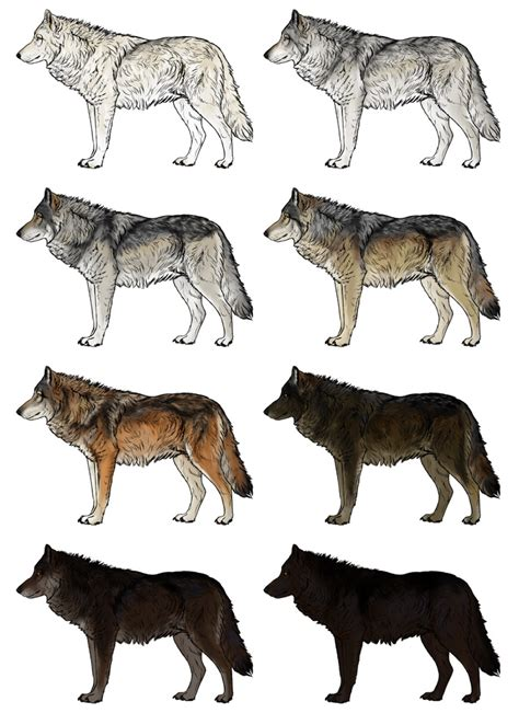 wolf colors gray wolf drawing colored