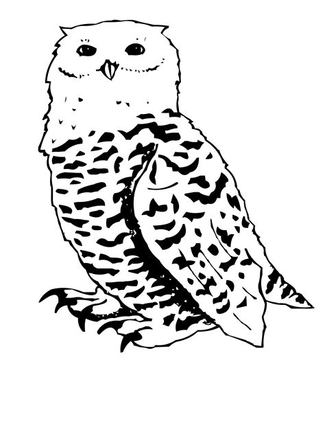 bluebird canadian coloring pages print coloring