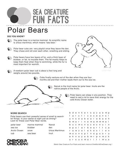 printable animal fun facts polar bear one world one ocean