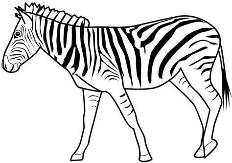 imagenes de animales cebra imagen zone gt dibujos para colorear gt animales cebras cebra 01