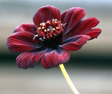 immagini fiori stupendi fiori rari i pi 249 belli al mondo lombarda flor