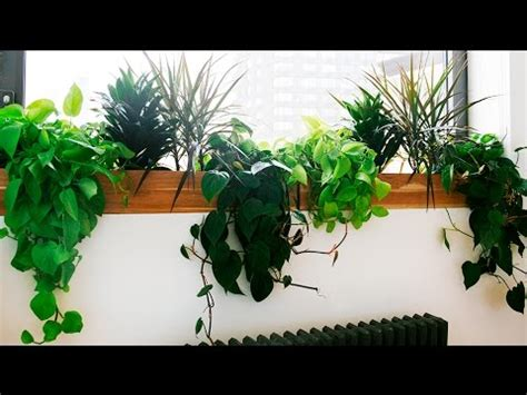good houseplants best indoor plants best indoor plants low light youtube