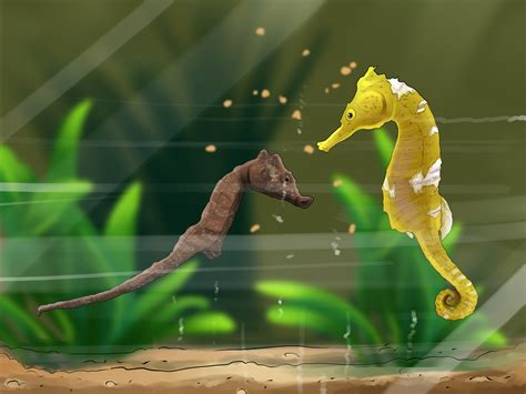 care   seahorse  steps  pictures wikihow