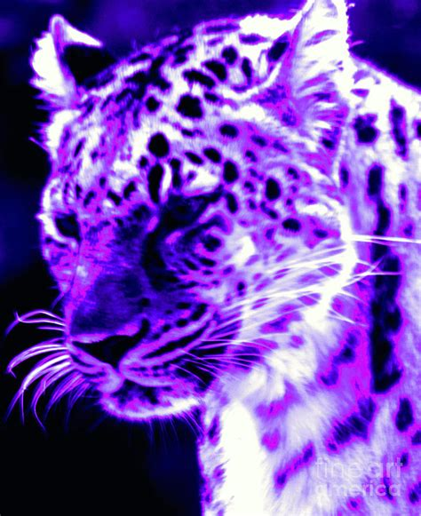 purple jaguar purple jaguar by nick gustafson