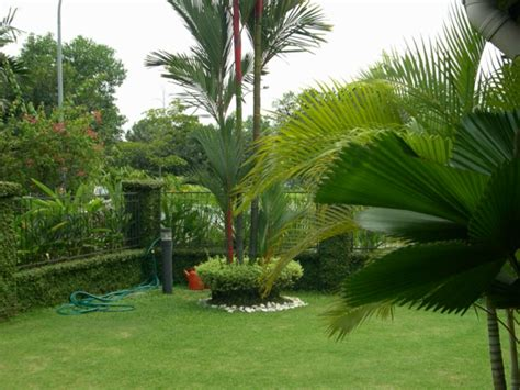 Garten Mit Palmen Gestalten 3162 by 50 Moderne Gartengestaltung Ideen