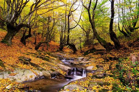smoky mountain fall colors inside look fall in the smoky mountains