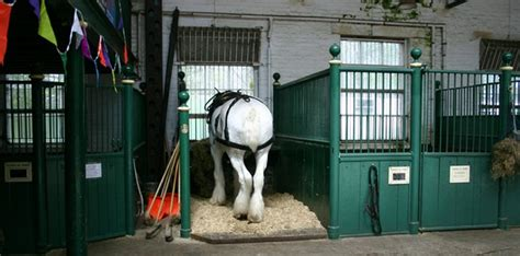 stable section equiculture horse ownership responsible sustainable ethical