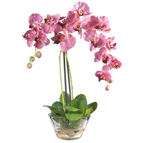 Orchid In Glass Vase phalaenopsis orchid with glass vase 4643