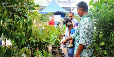 Harga Bibit Durian Bawor 2016 tips untuk anda yang ingin belanja bibit durian unggul