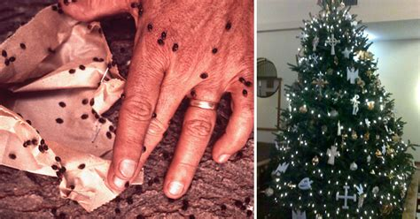 christmas tree bugs pictures is your tree crawling with bugs here s exactly how to find out wise