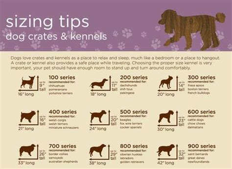 kennel sizes puppy care 101 how to make crates paperblog