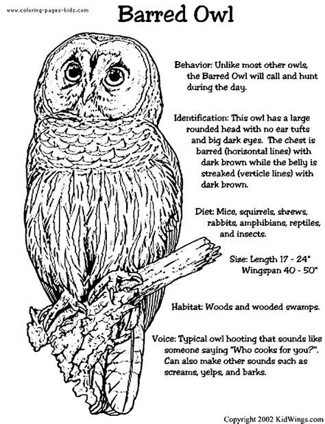 screech owl coloring page barred owl color page
