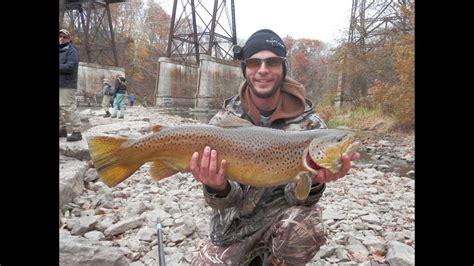 Monsta Brown brown trout fishing in western new york