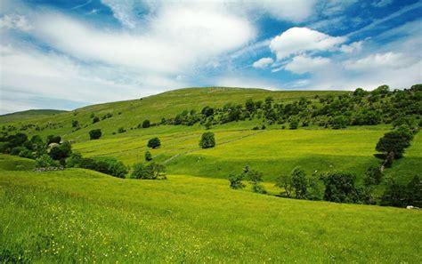 Meadow Wall