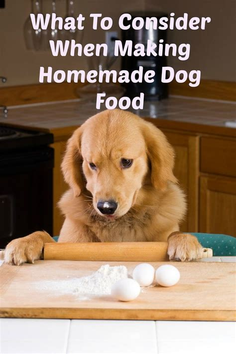 golden retriever puppy food recommendations 100 food recipes on food canned food and food for