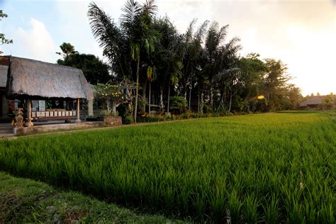 Detox Bali Budget by Bali Weight Loss Retreat Affordable Luxury Detox Resort