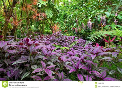 Colorful Tropical Plants - colorful lush tropical rain forest royalty free stock photos image 14958718
