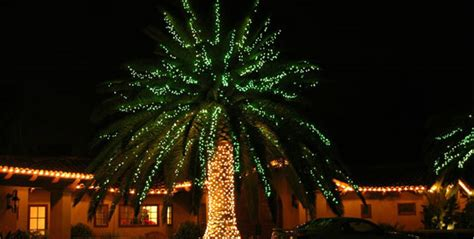 tree shop valley ny pictures of palm trees with lights rainforest