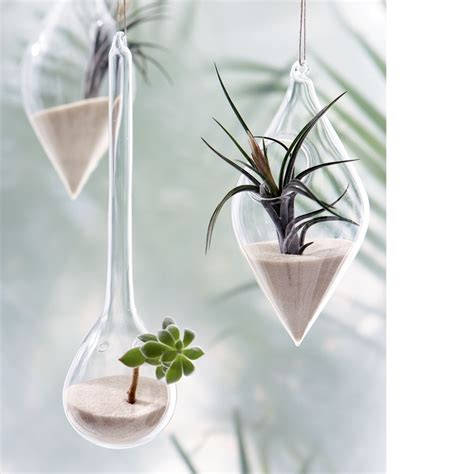 hanging air plant 1000 images about succulents air plants on air plants succulents and hanging