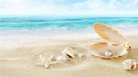 Permalink to Seashell Wallpaper Hd For Android