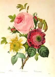 Vintage Flower Drawing - rose anemone clematis 1979 vintage flowers book plate print
