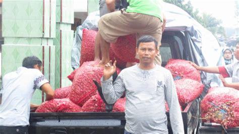Bibit Bawang Merah Berkualitas bawang merah berkwalitas dari tegal