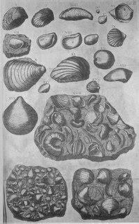 Histórias da Geologia: Gravuras de fósseis na Protogaea de