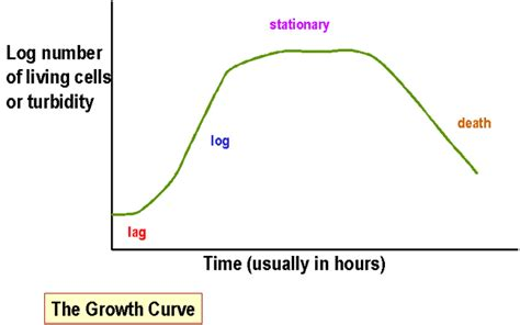 Bacterial Nutrition Growth And Energy Metabolism