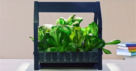 ikea hydroponics garden ikea launches indoor garden that can grow food all year