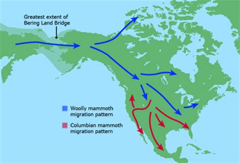 american migration from asia map thefuzzysasquatch the peopling of the americas ii bering