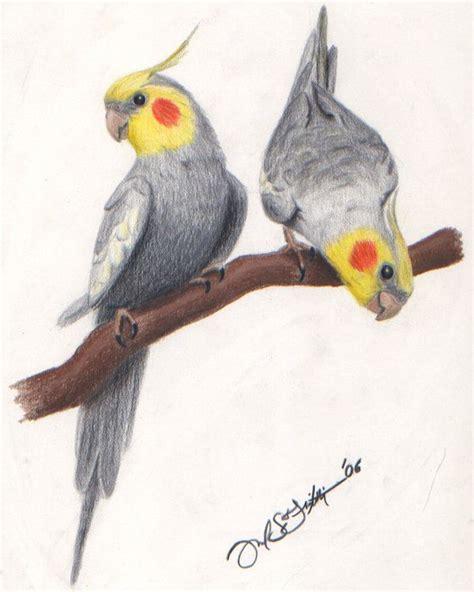 libro bird art drawing birds 55 best images about cockatiel art on acrylics parrots and birds