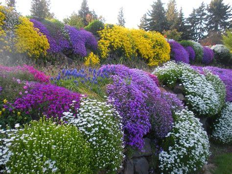 fiori perenni tappezzanti piante perenni piante da giardino piante perenni arbusti