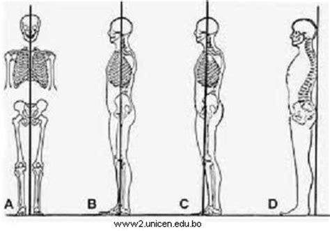 cuales son las cadenas musculares pdf educaci 243 n f 237 sica alineaci 211 n postural direcci 243 n de