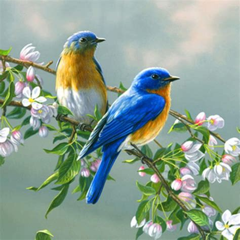 google images birds birds live wallpaper android apps on google play