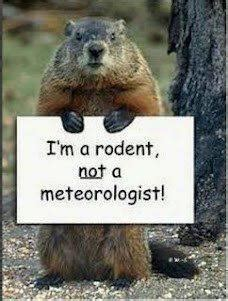 groundhog day jokes pictures happy ground hog day joke