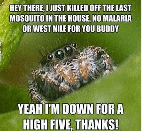 Meme Spider - chuck s fun page 2 five of the quot spider quot meme