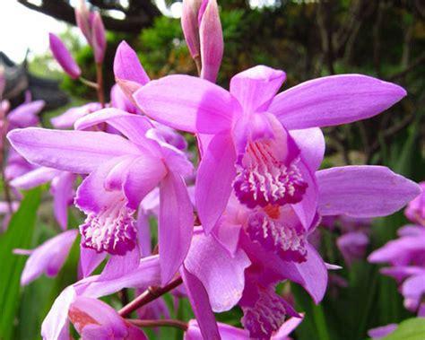 far fiorire le orchidee orchidea famiglia orchidiaceae come curare coltivare