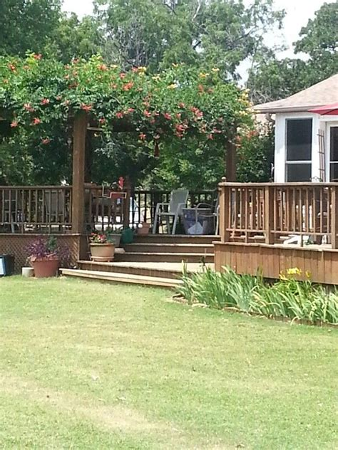 backyard vines 17 best images about possible pergola vines on pinterest