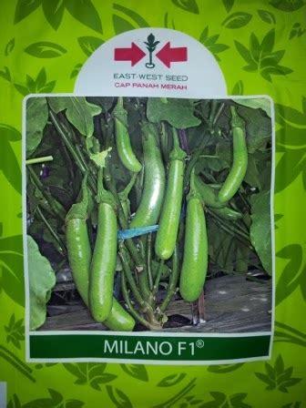 Bibit Terong Hibrida lmga agro jual produk pertanian harga murah dan