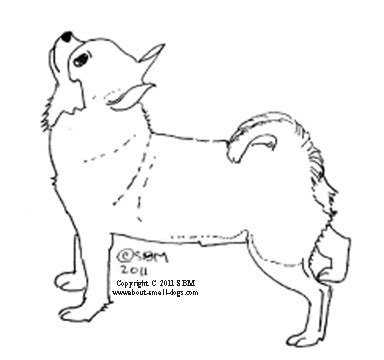Chihuahua Colouring Pages Real Dog Chiwawa Coloring Pages Coloring Pages by Chihuahua Colouring Pages