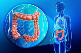 diet and colorectal cancer risk and survival oncology central