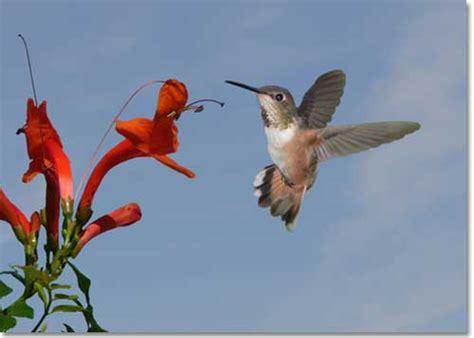 how to create a backyard nature preserve desertusa