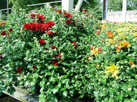 fall garden plants fall plants for your garden