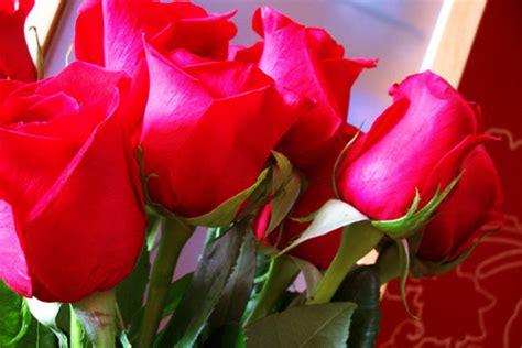 imagenes de flores hermosas grandes flores cuidado de plantas page 2