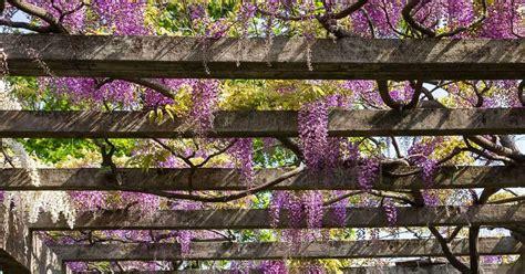 13 best plants for your pergola