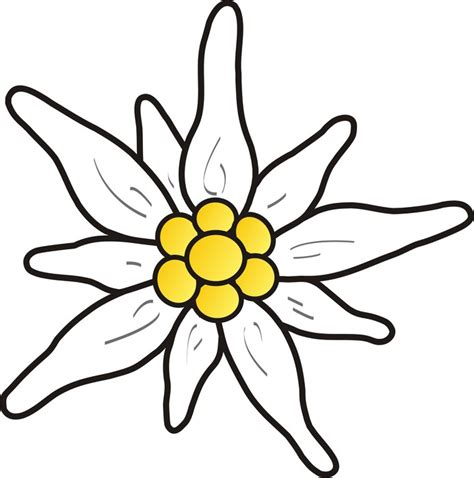 Edelweiss Aufkleber by Sticker Edelweiss 3 Pixers 174 Nous Vivons Pour Changer